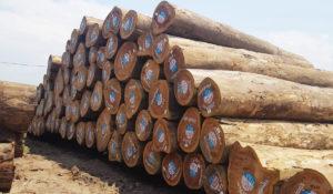 ifco grumes logs bois afrique tropical wood